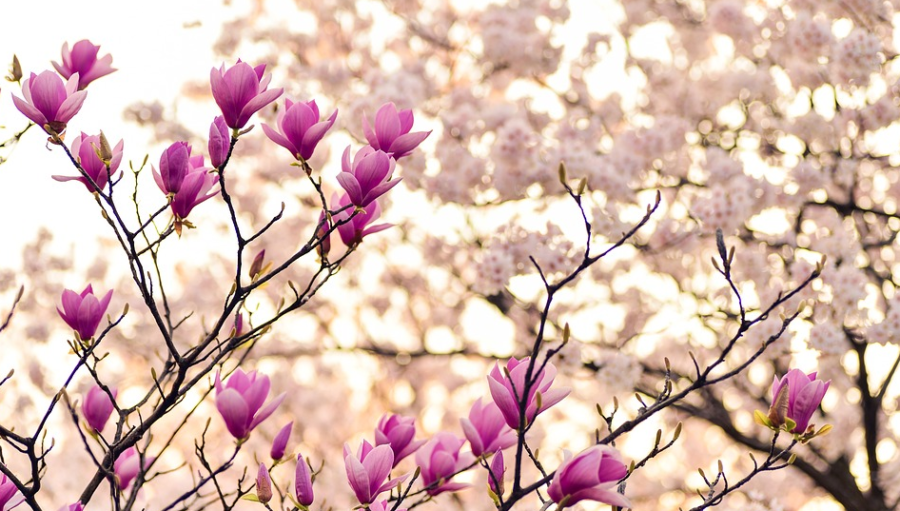 Blumen Express
