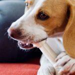 Tuen Sie Ihrem Hund etwas Gutes - Hochwertige Zahnpflege für den Vierbeiner